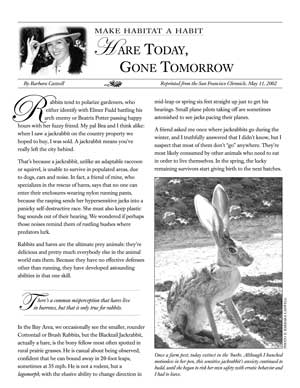 Make Habitat a Habit: Hare Today, Gone Tomorrow Page One