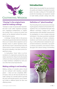 image: Cultivating Wisdom: How To Make Cannabis Cuttings Introduction