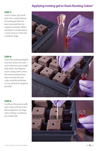 image: Cultivating Wisdom: How To Make Cannabis Cuttings Page Five